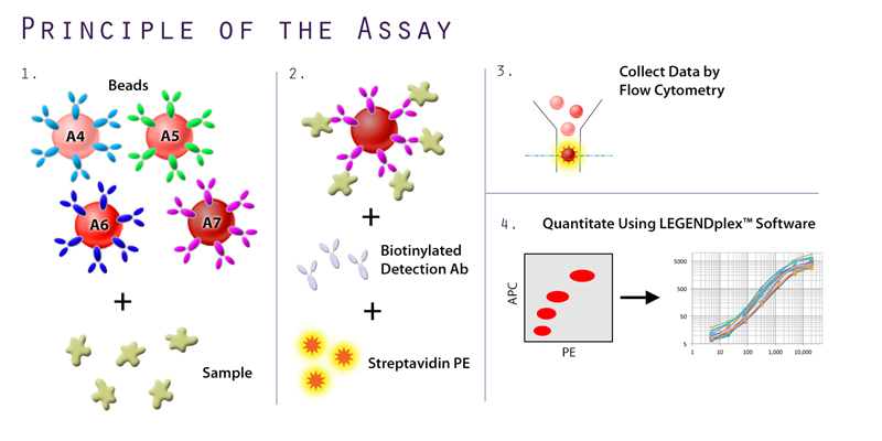 Principle of the Assay